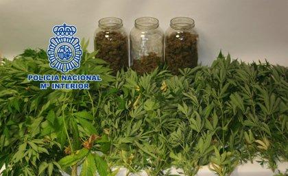 Detenido por vender marihuana a clientes de chiringuitos en las playas del Grao