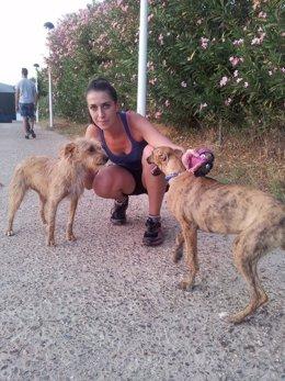 Una voluntaria de los paseos solidarios a canes de la perrera de Mérida