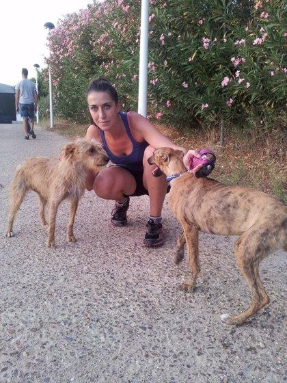 """Una protectora organiza """"paseos solidarios"""" a los canes de la perrera de Mérida para fomentar las adopciones"""