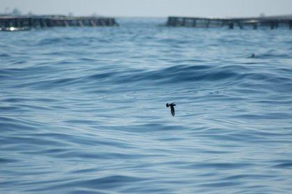 Imida obtiene ayuda para un proyecto de investigación sobre la acuicultura marina como recurso para la fauna silvestre