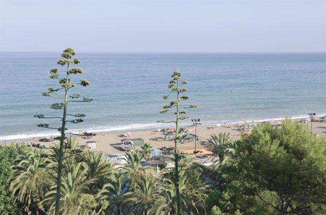 Playa del Ejido en la Costa del Sol, turismo
