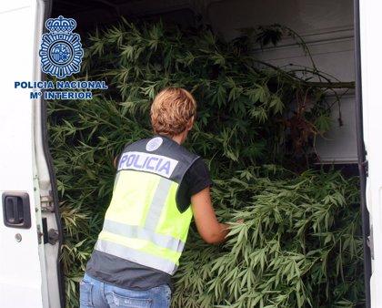 Detenidos dos hermanos con 63 plantas de marihuana en su finca
