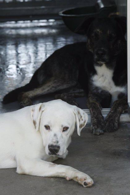 Las denuncias por malos tratos a perros suben hasta 585 en 2013 en Canarias