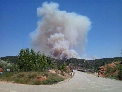 Extinguido el incendio forestal de Cogolludo