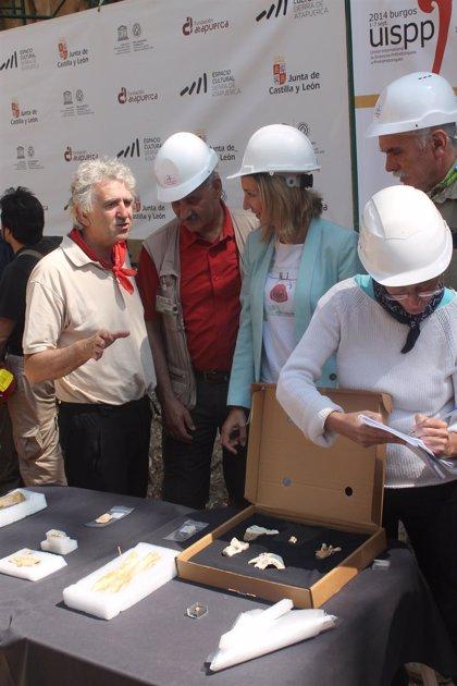 Indicios de fósiles de 1.700.000 años en Atapuerca