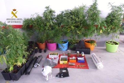 La Guardia Civil detiene en Montilla a dos personas por cultivo de marihuana