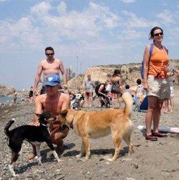 Playa canina perros arroyo Totalán, entre Málaga y Rincón de la Victoria