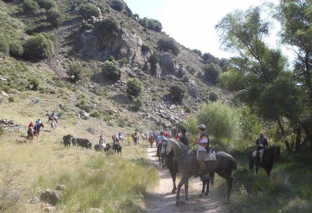 Exhibición de Trashumancia Aranda de Moncayo.