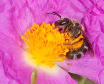 Airbus presenta los datos de su impacto medioambiental mediante el estudio de las abejas