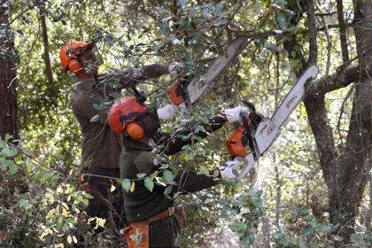 Unas 72 personas en riesgo de exclusión han ayudado a mejorar los ecosistemas naturales