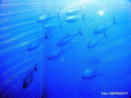 Pesca confía en que mejore la costera del bonito
