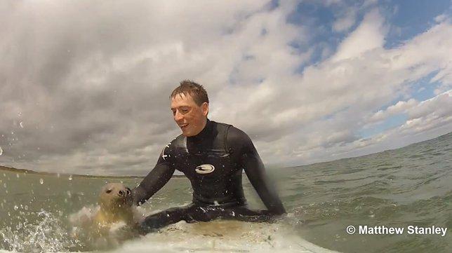 Foca surfeando