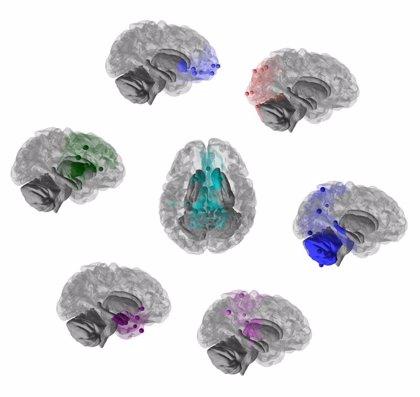 Cerebros de humanos y chimpancés son más similares de lo que se creía