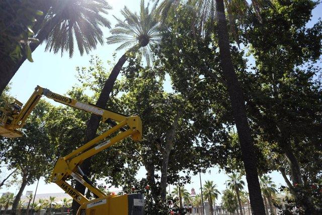 Palmera inclinada que el ayuntamiento va a retirar para evitar peligro