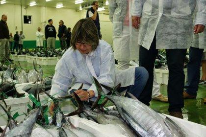 Pesca.- El valor económico de las descargas de bonito del norte en Galicia sube un 5% y supera los 7,8 millones de euros