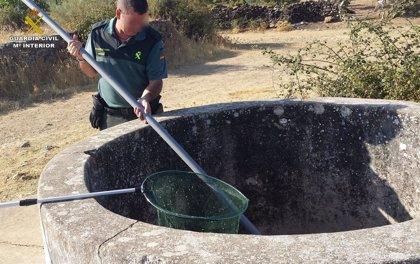 Rescatado un lagarto del interior de un pozo