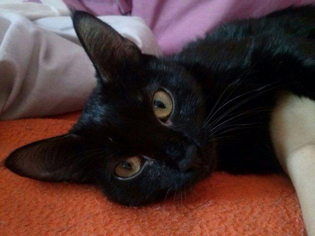 Gato recuperado