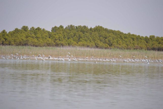 Lagunas Villafranca de los Caballeros