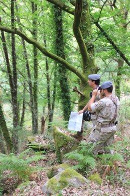 Militares en operaciones de prevención de incendios forestales