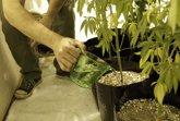 Foto: Uruguay abre este miércoles la inscripción para quienes quieran cultivar marihuana en su vivienda