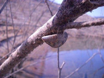 Medio Ambiente restringe la navegación en embalses del Ebro afectados por mejillón cebra y caracol manzana