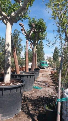 Imagen de los árboles en el vivero de Foralia