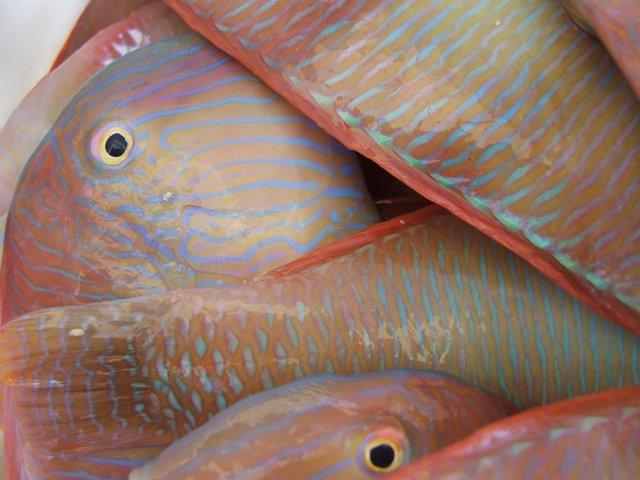 La temporada de pesca del raor empieza el 1 de septiembre