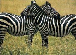 Cebras en el Parque Nacional del Serengueti (Tanzania)