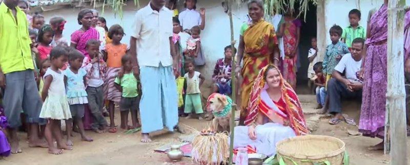 Joven india se casa con un perro para alejar la mala suerte - Evitar la mala suerte ...