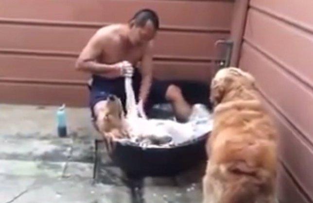 Perro relajado como en un spa