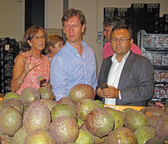 Heredia (PSOE) visita la empresa Tropical Millenium en Vélez-Málaga