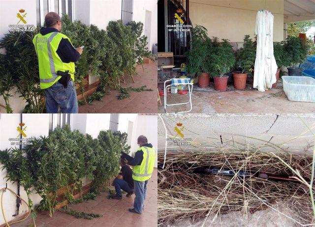 La Guardia Civil desmantela dos puntos de cultivo de marihuana