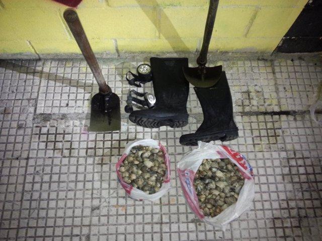 Marisco ilegal intervenido en Vigo