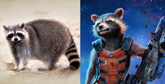Rocket y un mapache
