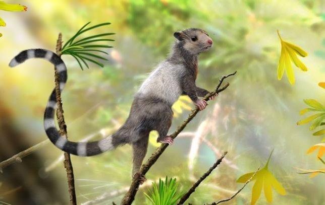 Especies extintas de ardilla
