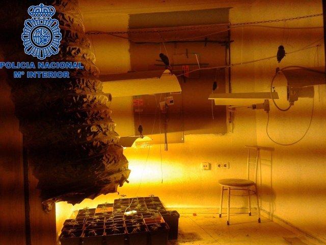 Plantación de marihuana en una vivienda