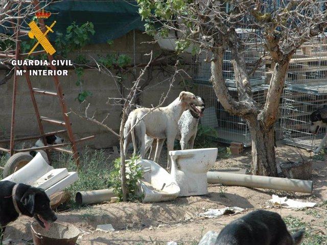 Imputada por el maltrato animal la responsable de una protectora.