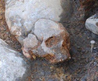 Cráneo de mujer de Kanaljorden