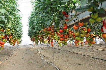 Empresas agroalimentarias extremeñas se reúnen en FIAL con compradores de 23 países