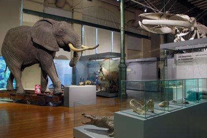 Los niños podrán dormir con los animales del Museo Nacional de Ciencias Naturales en la noche de los investigadores