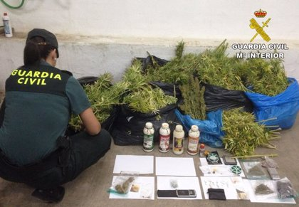 Detenidos dos vecinos de Villamalea (Albacete) e intervenidos 22 kilos de marihuana