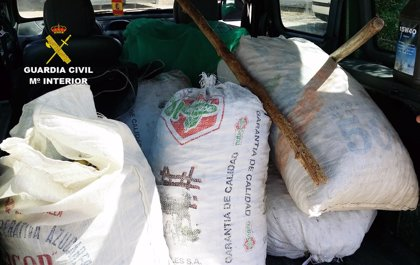 Detenidas 11 personas por robar presuntamente unas dos toneladas de almendras en fincas de la Región