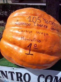 La calabaza más grande de Andalucía