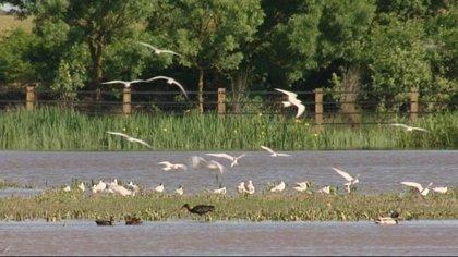 Denuncia contra la CHG por presunta prevaricación en el acuífero de Doñana