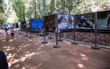 El bosque de la Alhambra se llena de imágenes de animales salvajes