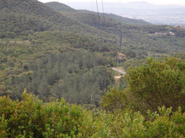 Mejora de una línea de alta tensión de Endesa en Girona