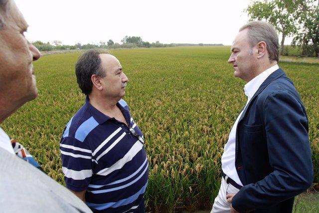 Fabra visita campos de arroz y la Cooperativa de Catarroja (Valencia)