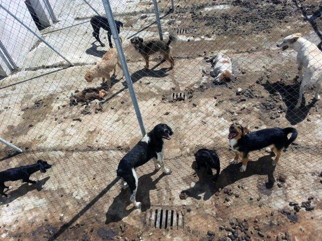 Dos cadáveres de perros sin retirar en la perrera municipal de Vélez-Rubio