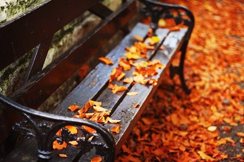 c5658b8e8 Lista de 24 planes para hacer cuando empieza el otoño