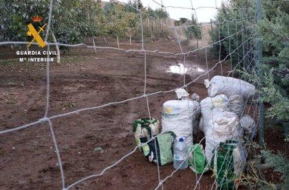 La Guardia Civil sorprende a tres vecinos de Badajoz cuando sustraían nueces de una explotación de Montijo